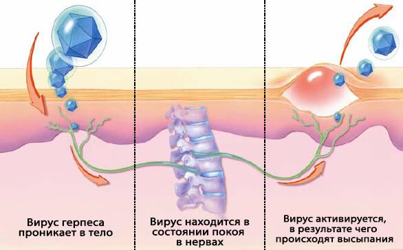 Проникновение вируса в тело
