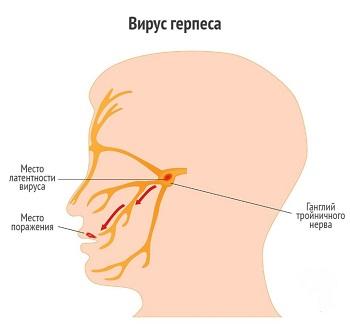 Распространение по тройничному нерву