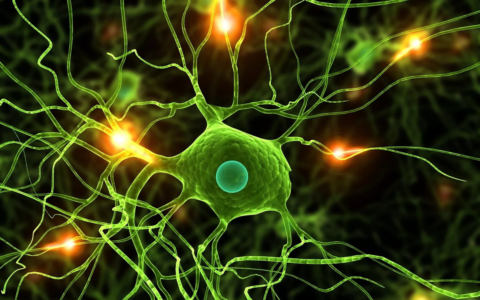 Нервная клетка организма