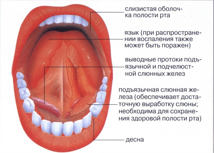 Строение под языком